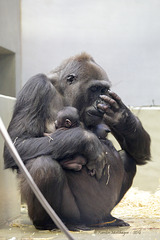 Tuana hat wieder ein Baby (Wilhelma)