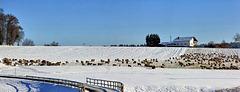 Winteridylle in Oberschwaben (PIP)