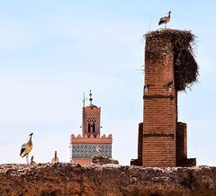 Storks...