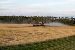 Harvest in Alberta