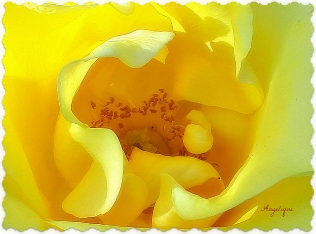 Au coeur de la rose ............!bon mardi