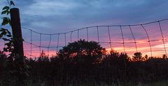 Fence, sunset, Hudson 2