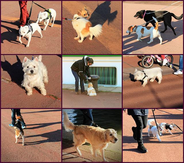 Les petits chiens de Rouen sont de sortie