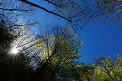Blick aus der Rappenlochschlucht nach oben (© Buelipix)