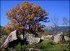 Autumn shot