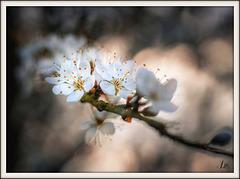** Quelques fleurs **
