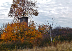 Ein trüber Novembertag - A gloomy November day