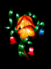Kölner Zoo - China Light Festival