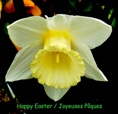JOYEUSES PAQUES / HAPPY EASTER/ FROHE OSTERN