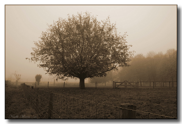 HFF  -  In The Mist