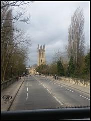 poplars at Magdalen Bridge