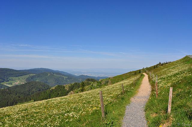 der Weg nach unten (© Buelipix)