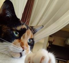 Zoe - close up