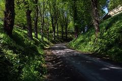 Une plaisante petite route de campagne .