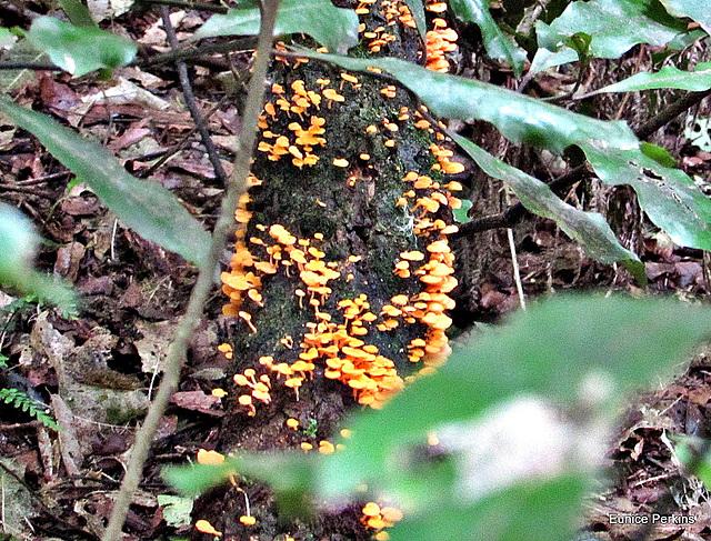 Fungi On a Fallen Branch