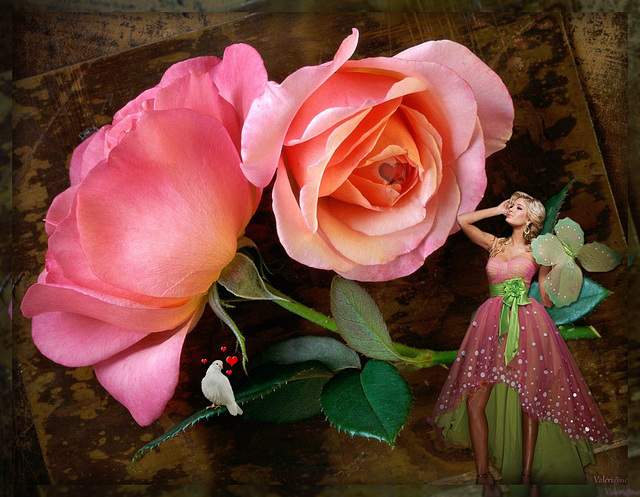 Rose d'amour*************