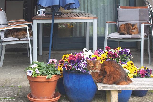 Veranda cats
