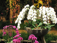 Orchid Fountain