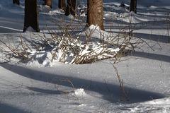 Licht im Wald - lumo en arbaro
