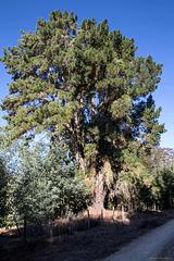 HFF und H.A.N.W.E. - Baum am Wegesrand