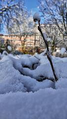 Belfort: 2017.12.01 Première neige 04.