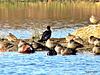 Lake Whakamaru Wild Fowl.