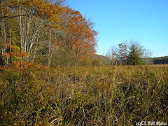 Upland Marsh Shoreline