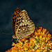 5297017 DxOdLM3 · Butterfly