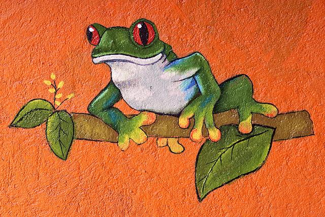 A Treeless Frog – Jungle Crocodile Safari, Tárcoles, Puntarenas Province, Costa Rica