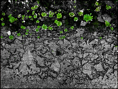 green (pip)