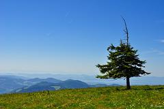 1/2 Baum auf dem Belchen (© Buelipix)
