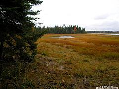 Tidal Marsh Shoreline