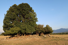 Site of a ruined church