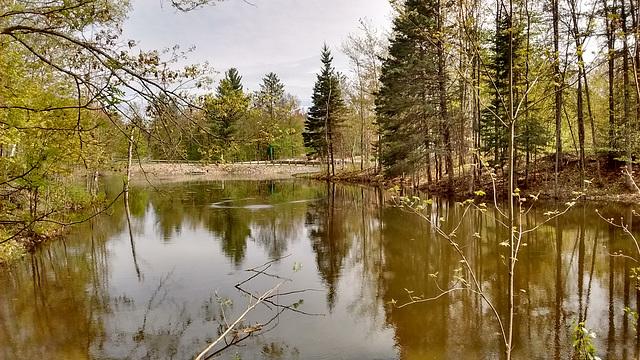 Nature apaisante du Québec