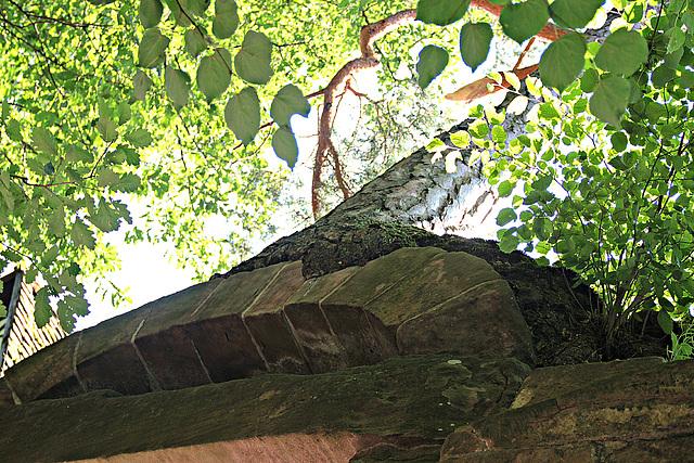 Der Baum auf der Klostermauer