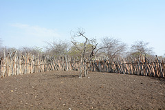 Namibia, Corral for Livestock in the Village of Onjowewe
