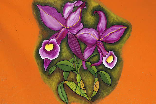 Purple Trumpet Flowers – Jungle Crocodile Safari, Tárcoles, Puntarenas Province, Costa Rica