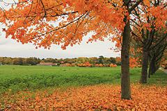 robe orange d'octobre