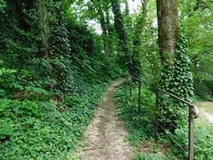 Le passage vert du parc********