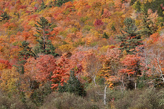 Autumn in New Hampshire (Explored)