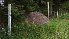 Der Ameisenhaufen ... oder ... Grenzgänger