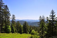 Schwarzwaldimpressionen am Belchen (© Buelipix)