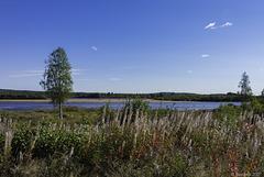 am Torne älv bei Hedenäset (© Buelipix)