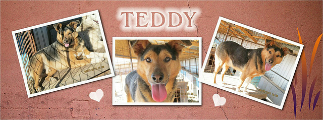 Teddy ... mein neuer Patenhund in Rumänien ♡
