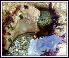 Another rock pool ...  well, they are photogenic, in the right light and location!