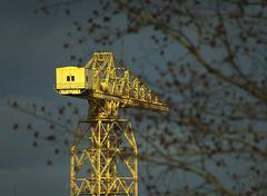 Yellow Cranes On The Tyne