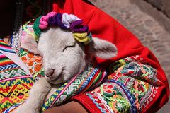 Maria had a little lamb (Explored)