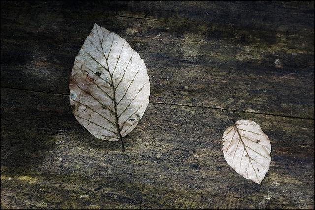 Paar Blätter