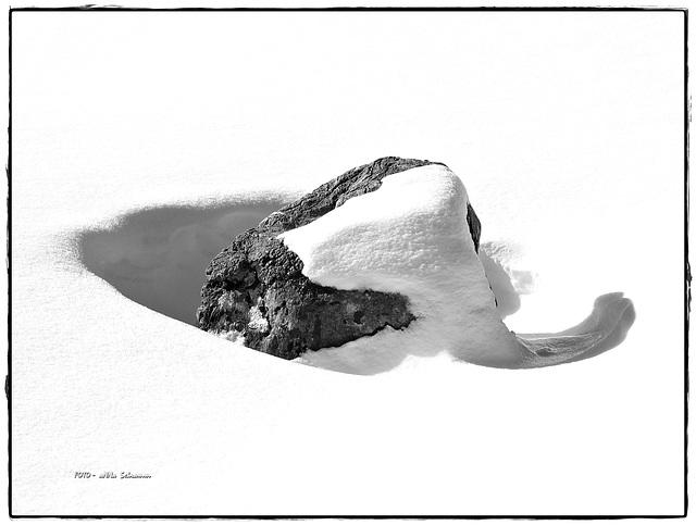 ein Mammut im Schnee