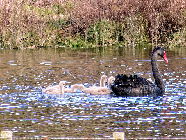 Water Babies.